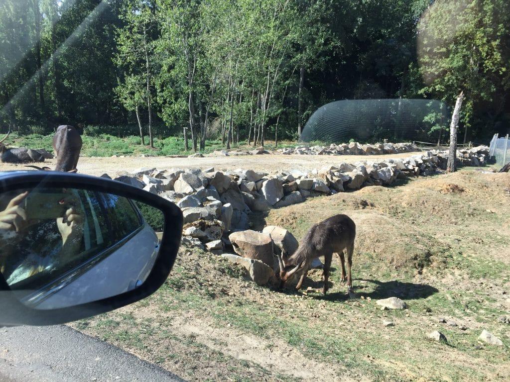 Safari Zoo de Thoiry