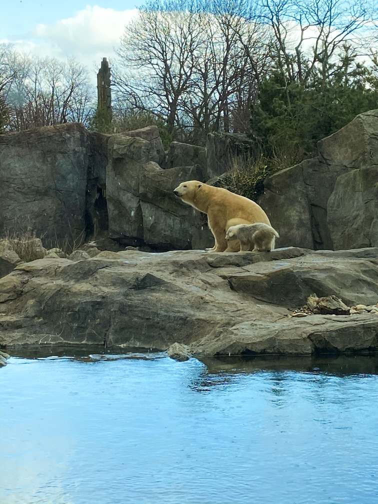 Visiter Vienne 3 jours - Zoo de Schönbrunn - Ourson polaire